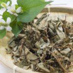 どくだみ茶でニキビやニキビ跡が治るって本当?